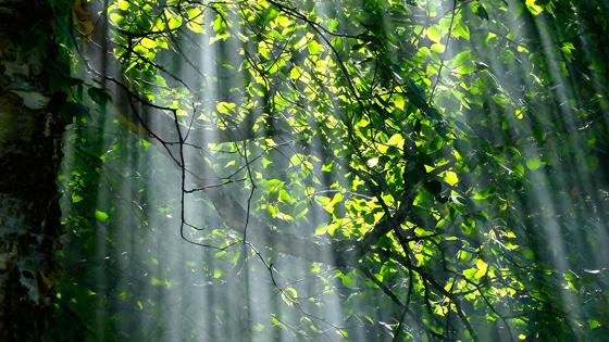 Nature Feeling - Tineke Vanheule