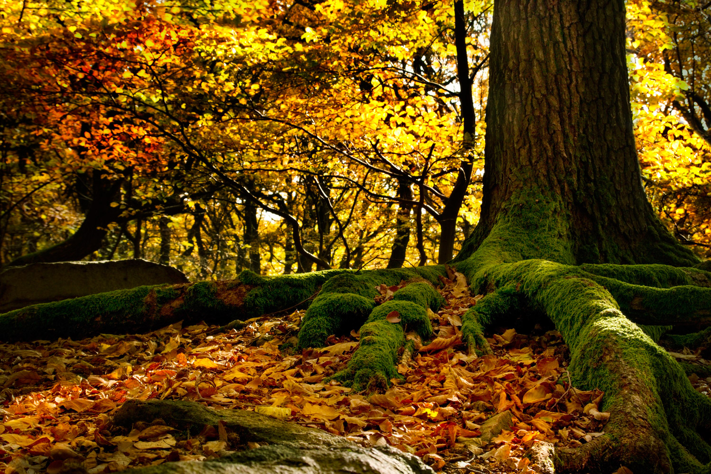 Nature Being - Tineke Vanheule