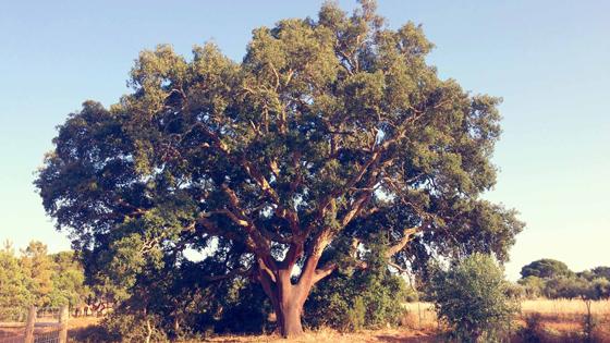 My Tree - Auteursrecht Tineke Vanheule
