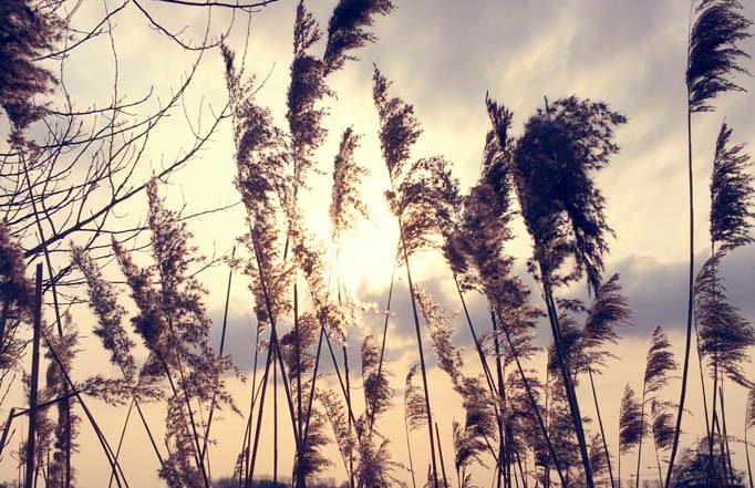 In blijde verwachting - nieuwsbrief - blog - Tineke Vanheule